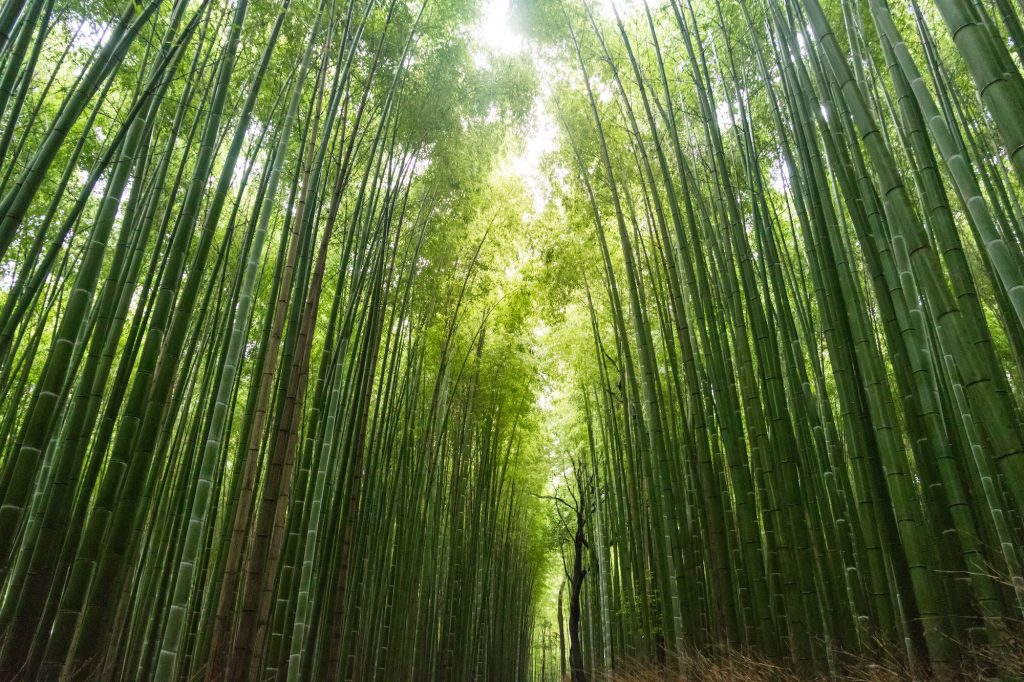 image of bamboo to illustrate business recovery