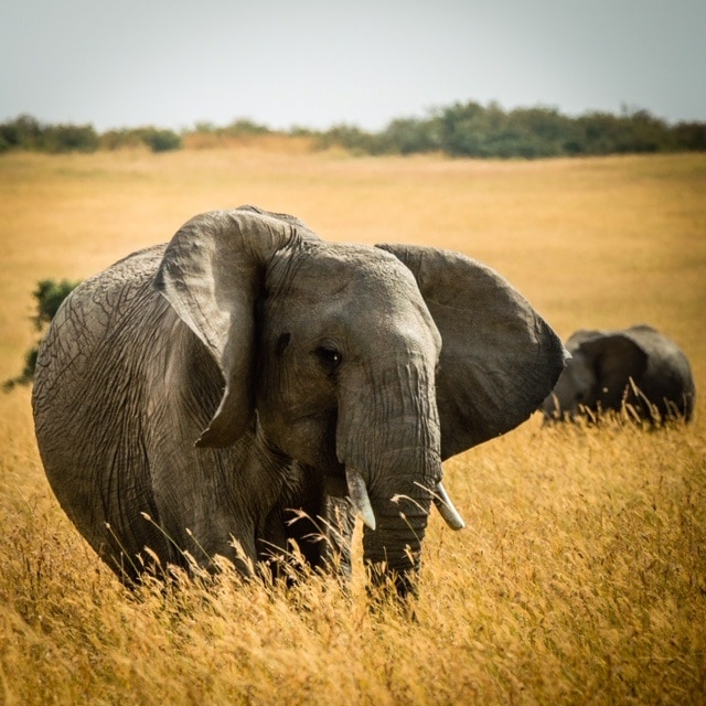 image of elephant represents What Is Social-Listening