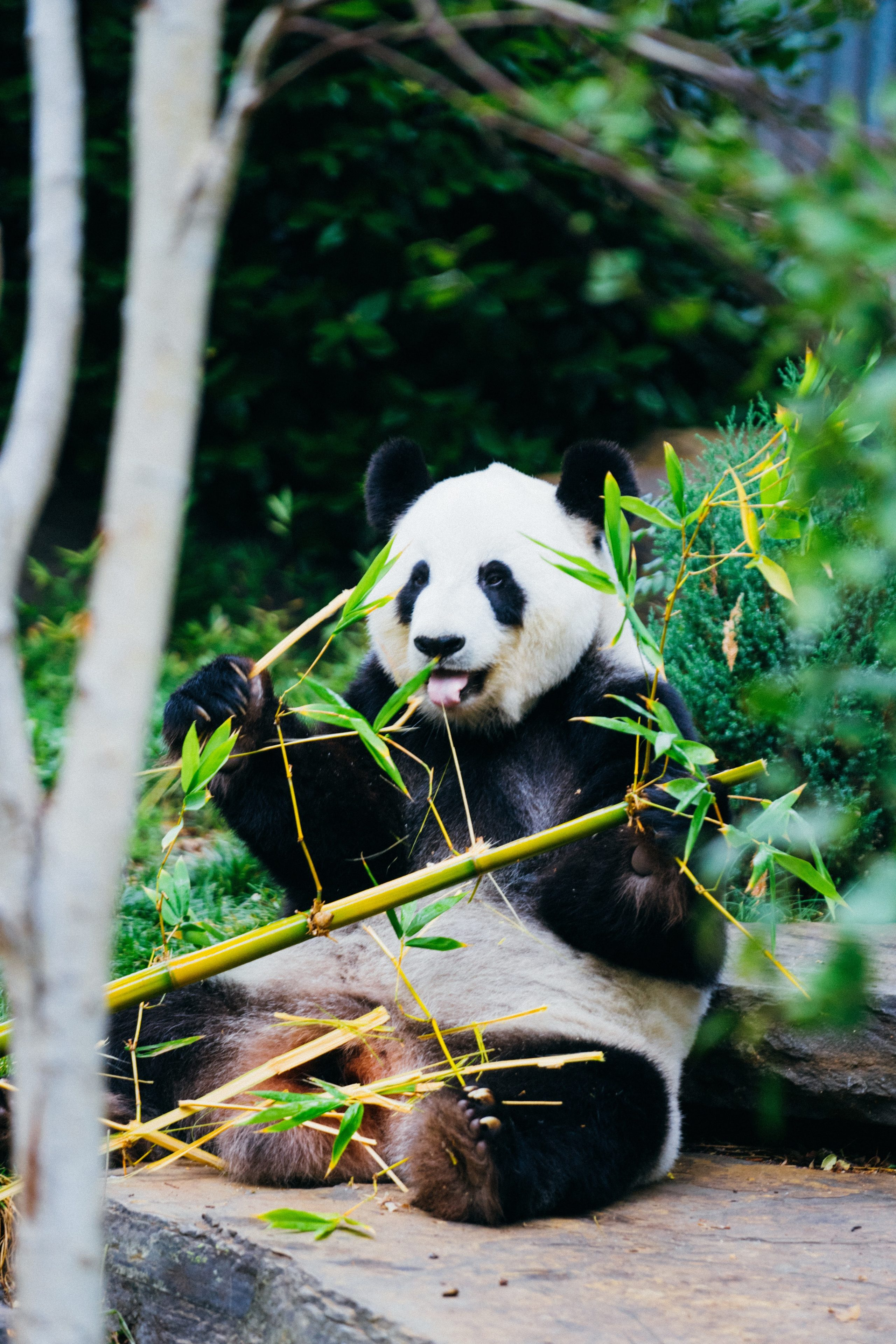 image of panda to illustrate9 things you need to know about niche marketing