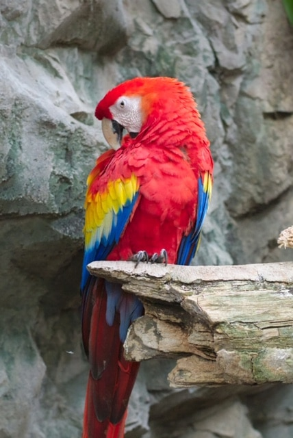 a macaw reminds you how to drive traffic to my website