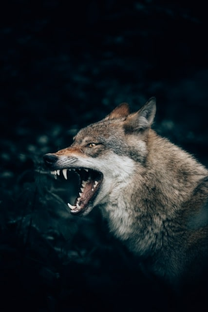 how to promote yourbrand's story illustrated by a wolf