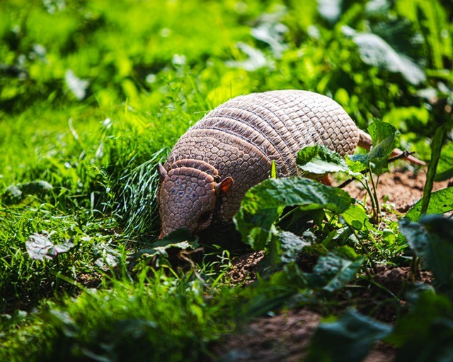 how to protect your business with image of armadillo to illustrate armour