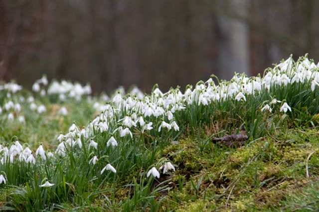 image of snow drops to illustrate how to identify new leads