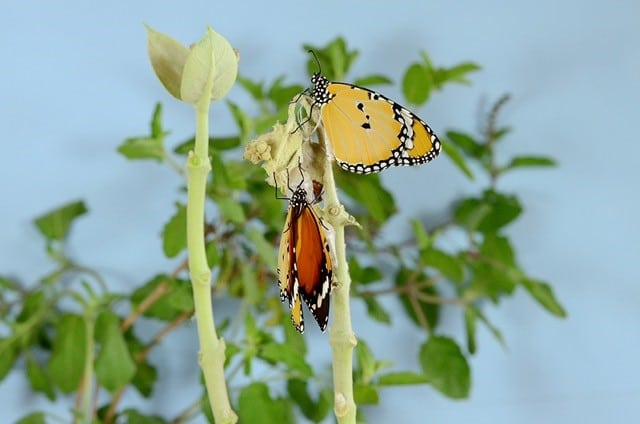 image of butterfly an chrysalis to represent business transformation