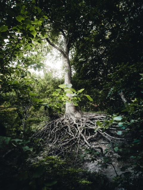 roots to illustrate the need for a firm base prior to making a strategic choice