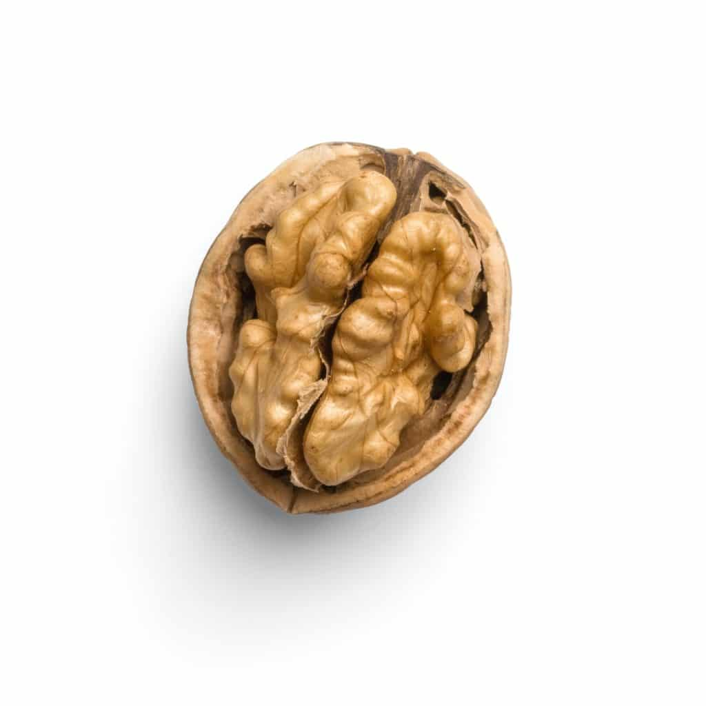 an image of a walnut to illustrate the future of content-creation
