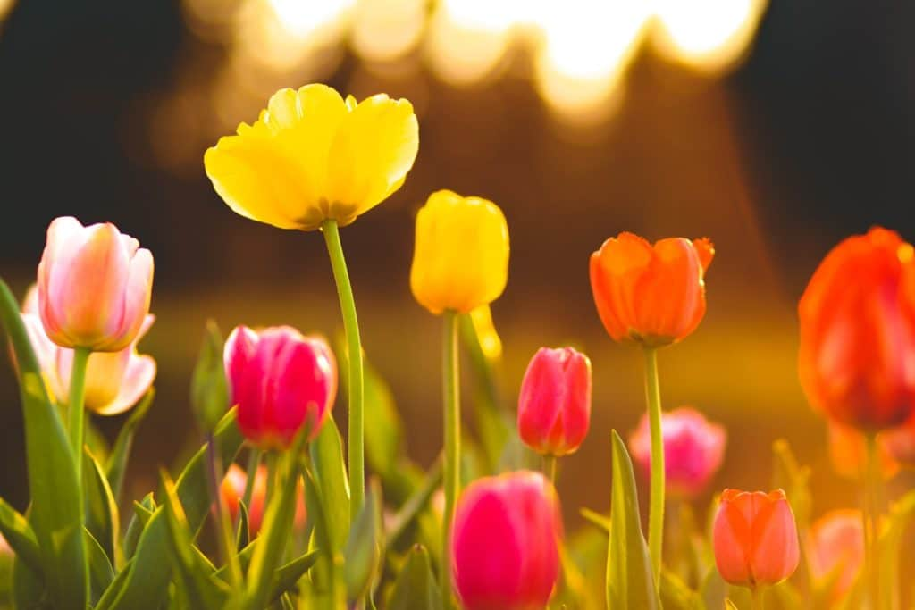 image of Spring flowers to illustrate the topic, how to find your audience online.