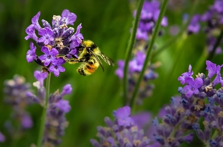 bee image to illustrate ways totrigger action from your customers create desire